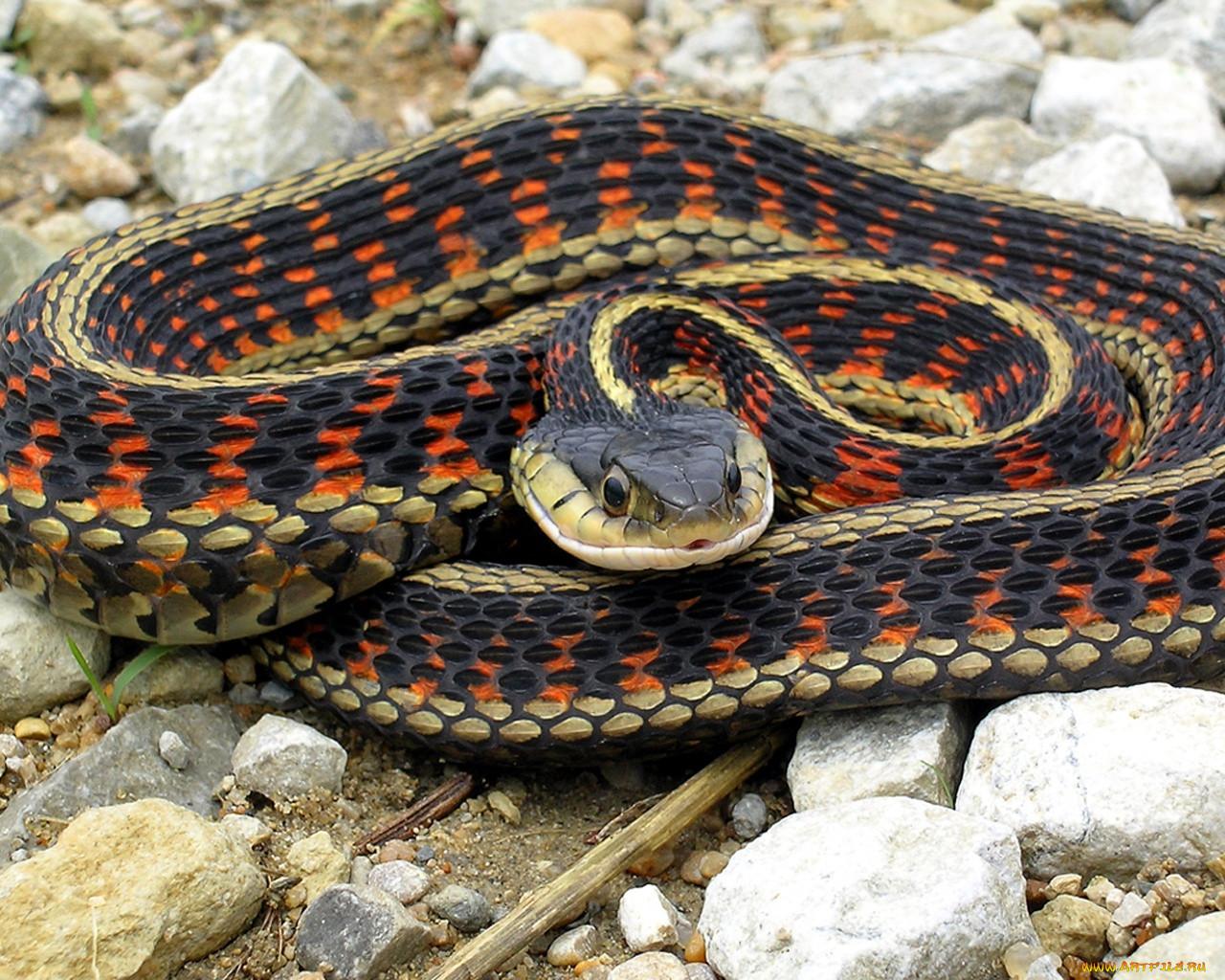 красивые, смотреть картинки змей суп, который можно